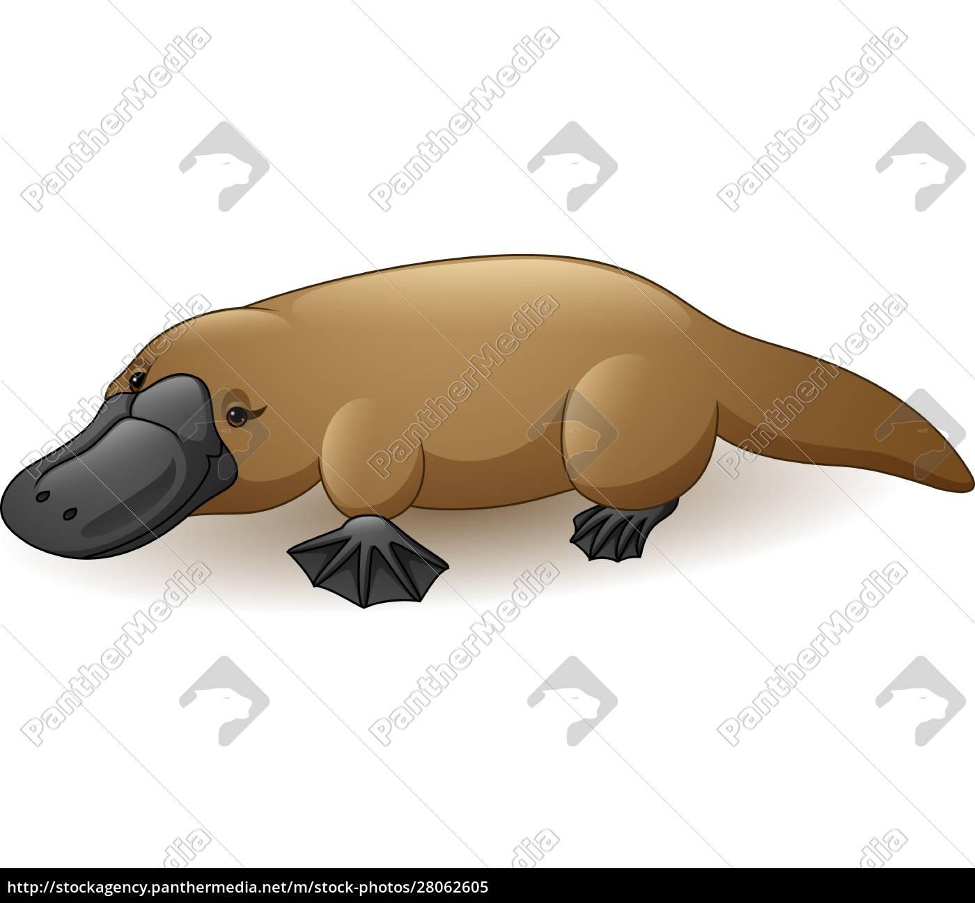 illustration, of, platypus, isolated, on, white - 28062605