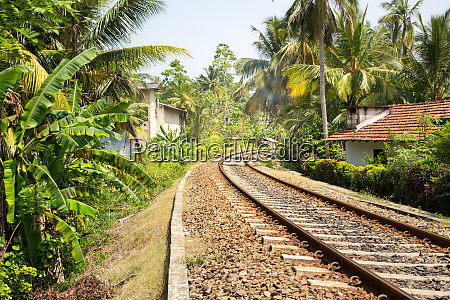 palm, forest, across, railway, road, on - 28062263