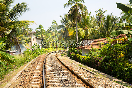 palm, forest, across, railway, road, on - 28062278