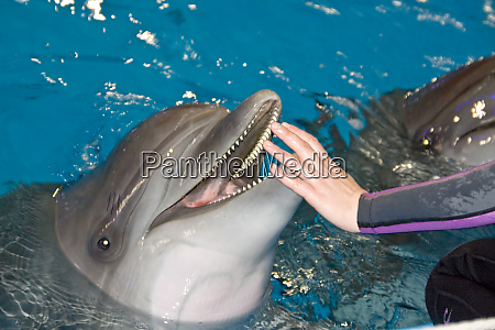 smiling, dolphin - 28062936