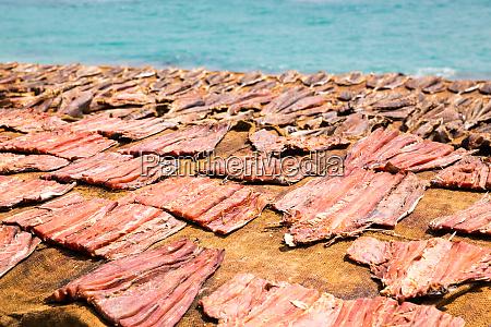 tuna, drying, process, on, the, coast - 28062314