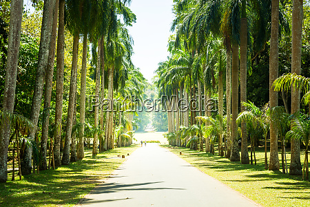 palm alley beautiful attractions of sri