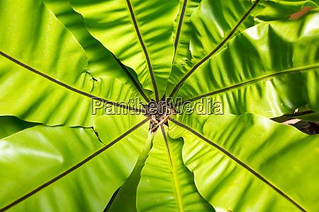 peradeniya flower ceylon tropical flora closeup