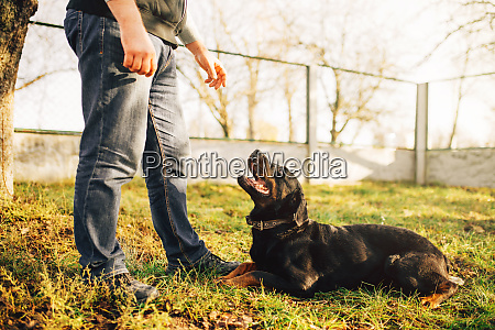 male cynologist with service dog training