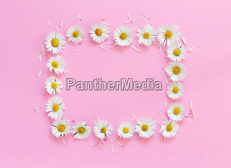 rectangular daisies frame on a pink