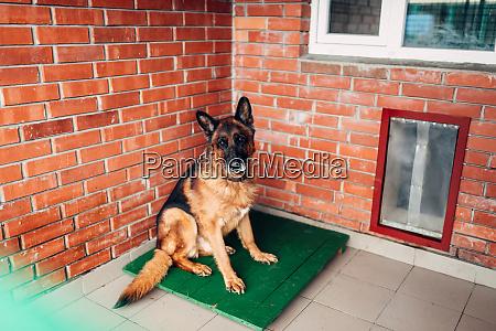 dog examining in veterinary clinic