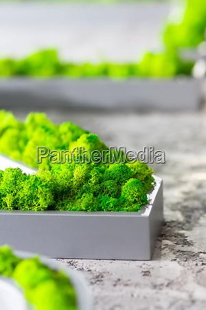 bright greenery
