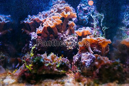 aquarium elements of flora closeup pet