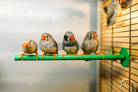 birds sitting on a stick in