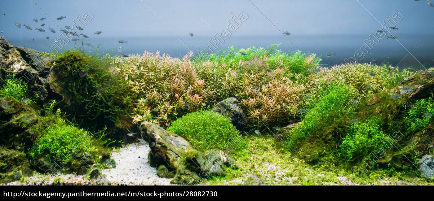 aquarium, algae, , elements, of, flora, in - 28082730