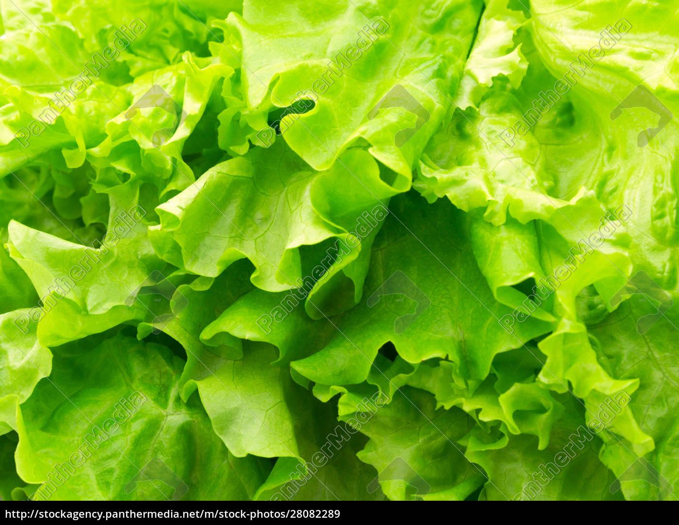 green, salad - 28082289