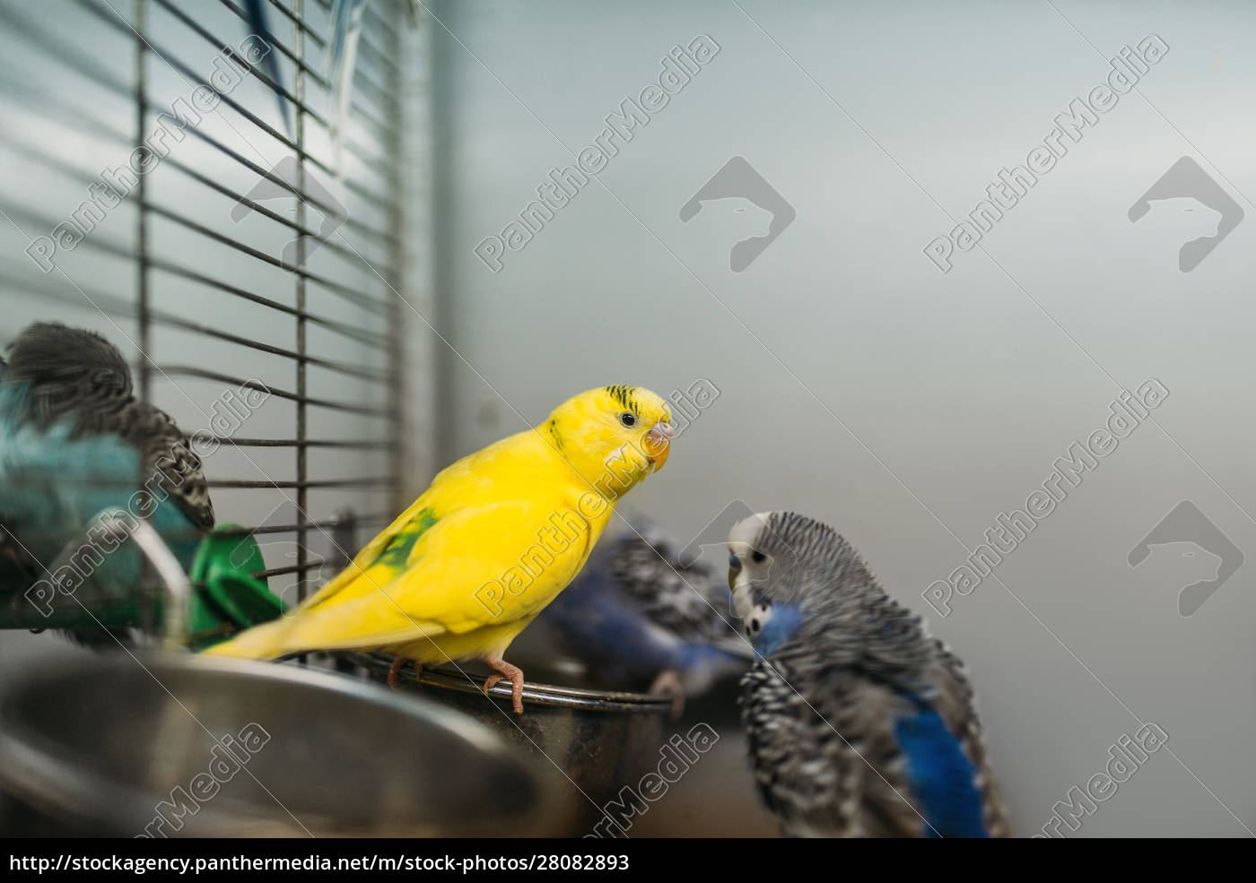 two, parrots, sitting, on, a, stick - 28082893