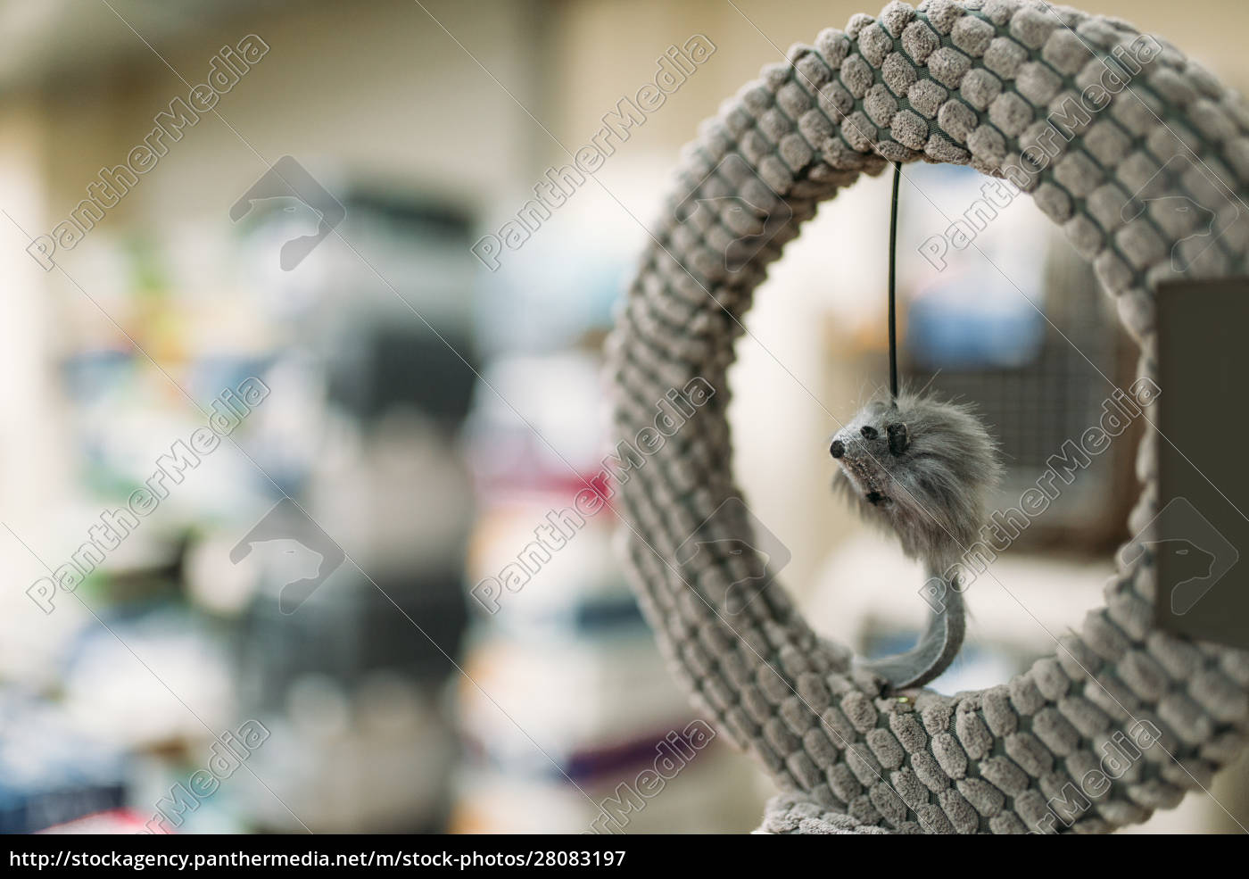 pet, shop, , ring, with, mouse, , accessories - 28083197