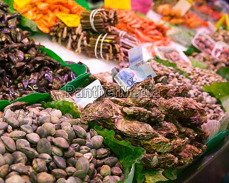 assorted mollusks