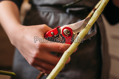florist hands cutting flower stalk