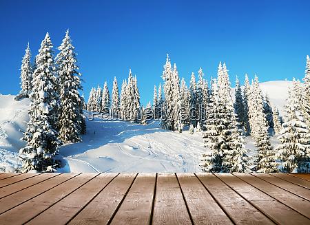 amaizing winter