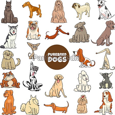 cartoon purebred dogs characters large set
