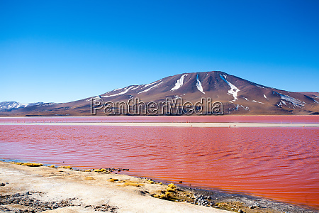 laguna colorada view bolivia