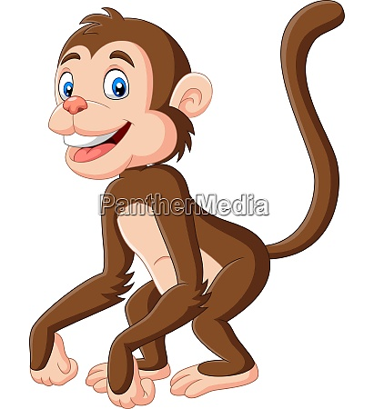 cute baby monkey cartoon on white