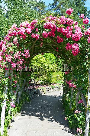 pink rose garden archway