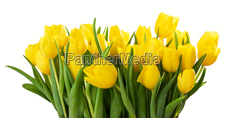 a large bouquet of flowers of