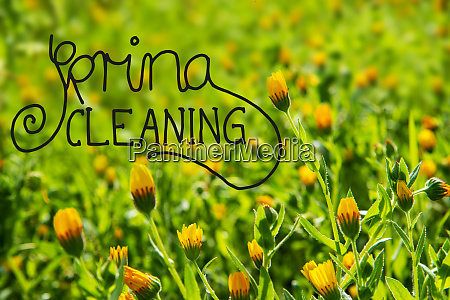 yellow flower meadow calligraphy spring cleaning