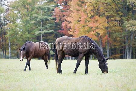 two horses in field