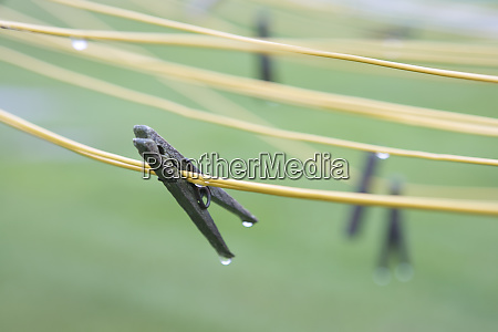 wet clothes pins on clothes lines