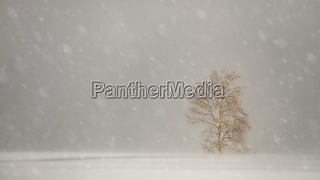 snowfall with large snowflakes over a