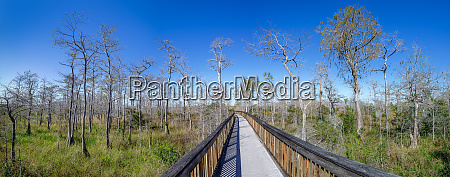 the nature of the everglades florida