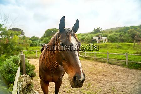 portrait brown horse in rural paddock