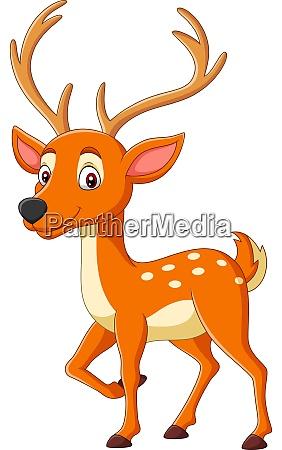 cartoon cute deer on white background