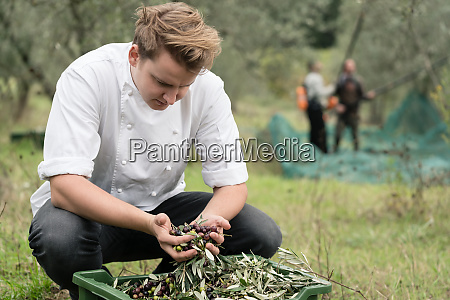chef inspecting quality of olives during