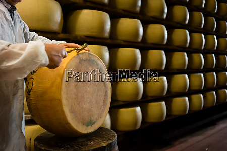 experienced worker in cheese factory testing
