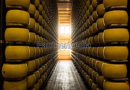 many wheels of parmesan cheese aging
