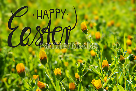 yellow flower meadow calligraphy happy easter