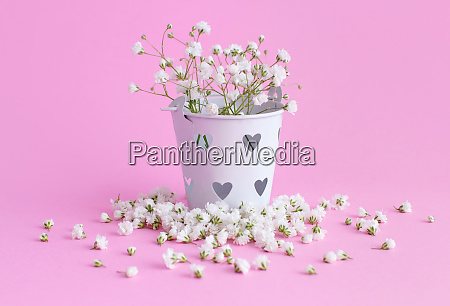 small white flowers in a