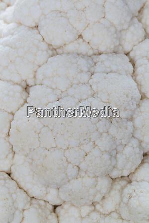 cauliflower macro detail background