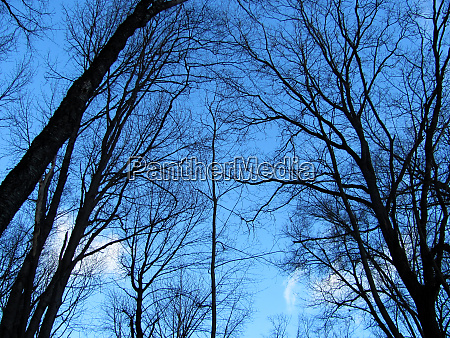 black tree branches on sky background