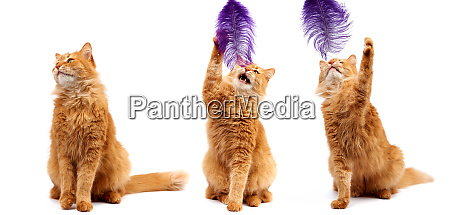 three cheerful cats isolated on white