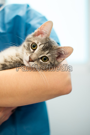 female veterinarian doctor is holding a