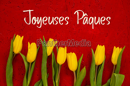yellow tulip flowers red background jaqeuses