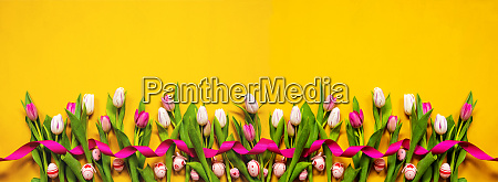 banner of yellow and pink tulip