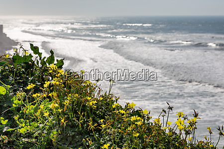 ocean coast with grass moviment waves
