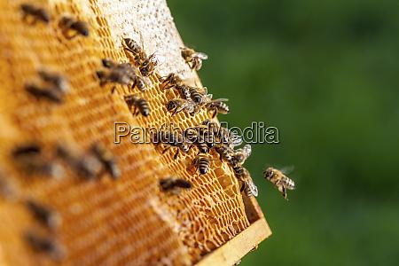 beekeeping in the czech republic