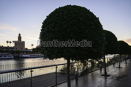 trees on footpath with torre del