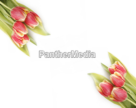 tulips in yellow and red
