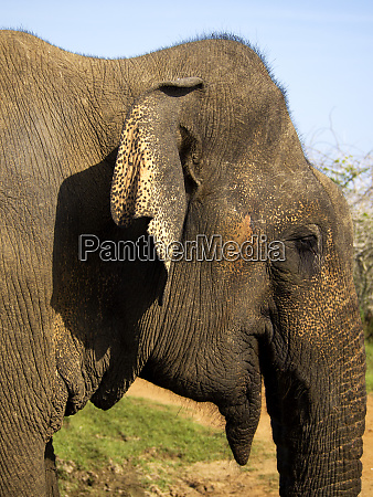 close up of a young elephant
