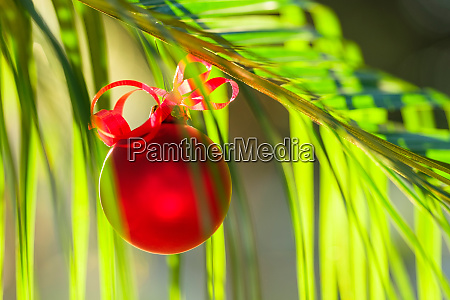 red bauble hanging from plant