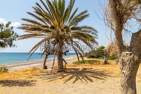 palm trees at the beach of
